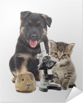 Plakat samoprzylepny Puppy i mikroskop