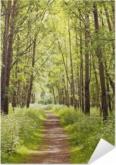 Plakat samoprzylepny Ścieżka w słonecznym lesie latem
