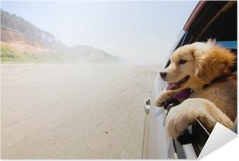 Plakat samoprzylepny Szczeniak patrząc przez okno samochodu