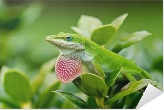 Plakat samoprzylepny Zielona Anole jaszczurka (carolinensis Anolis) pokazując różowy podgardle