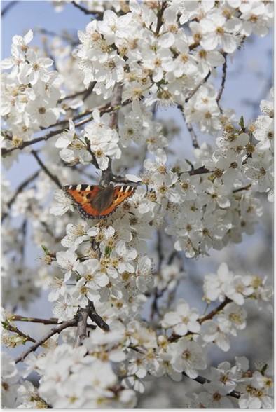 Plakát Schmetterling auf Kirschblüte vertikal - Témata