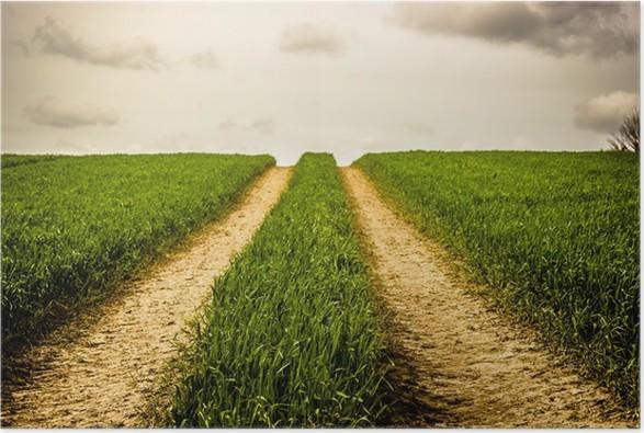 Plakát Silnice na poli s zelené trávy - Venkov