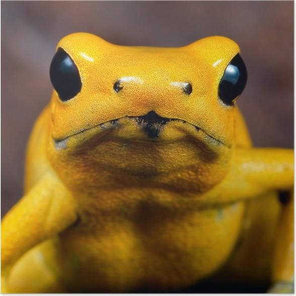 Plakát Šipky žabí jed - Žáby