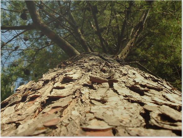 Plakát Strom vidět mravence - Stromy