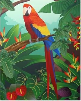 Plakat Szczegółowe ilustracji ptaków ara