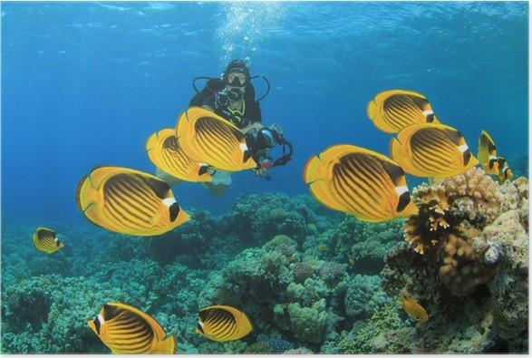 Plakát Tropické ryby na korálovém útesu s potápěč - Vodní sporty