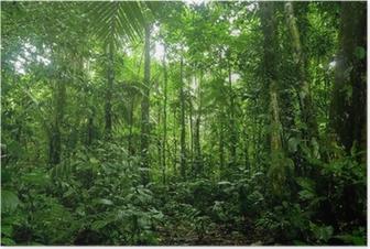 Plakat Tropikalne lasy deszczowe krajobraz, amazon