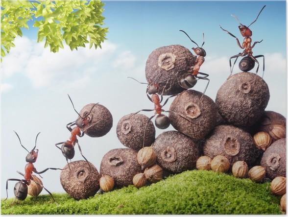 Plakát Tým mravenců sběru semen v prodeji, týmová práce - Zemědělství