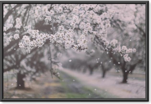 Plakát v rámu Mandlové sad kvetoucí - Krajiny
