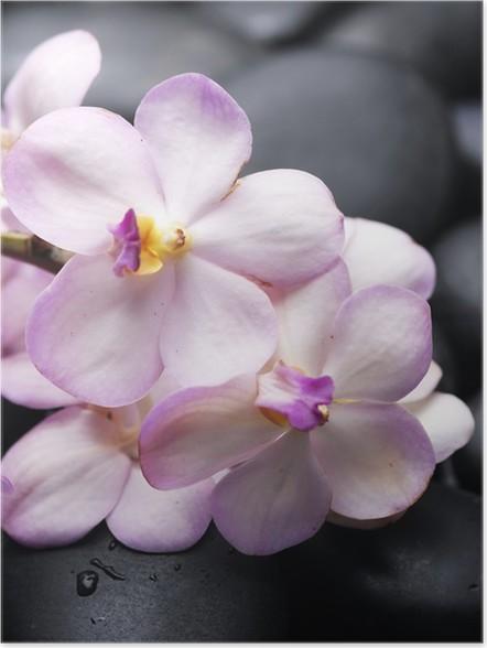 Plakát Větev orchidej s terapie kameny pozadí - Životní styl, péče o tělo a krása