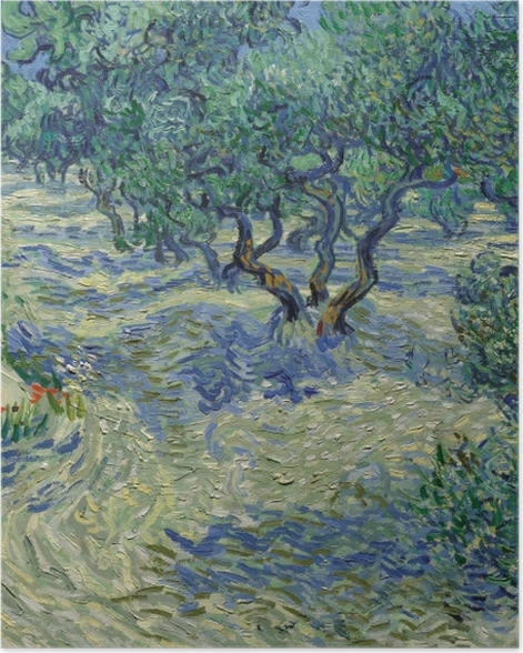Plakat Vincent van Gogh - Gaj oliwny - Reproductions