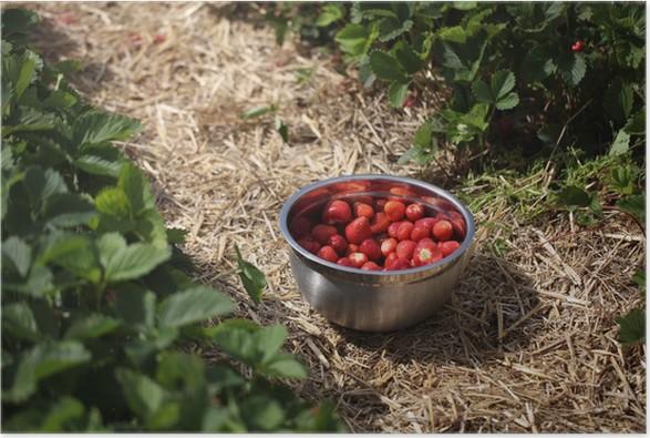 Plakát Vyberte si jahody - Ovoce
