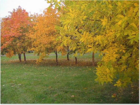 Plakat Wiersz Jesiennych Drzew W Różnych Odcieniach żółci I Pomarańczy