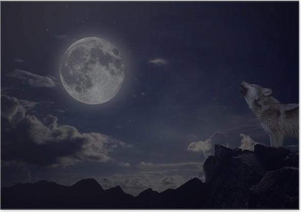 Fototapeta Wilk Wyje Do Księżyca W Pełni Pixers: Plakat Wilk Wyje Na Klifie W Połowie Nocy Z Pełni