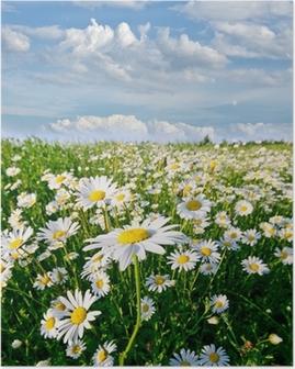 Plakat Wiosna: pole daisy kwiatów z nieba i chmur