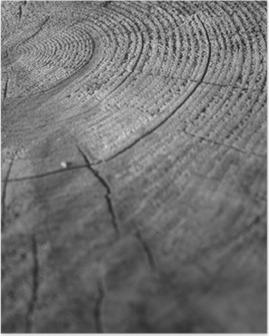 Plakát Wood