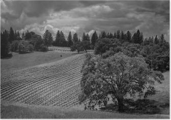 Plakat Wstrząsnąć Ridge Ranch Vineyards