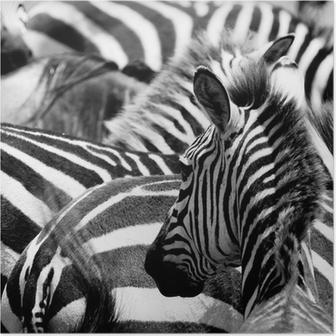 Plakat Wzór zebry