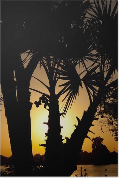 Plakát Západ slunce přes palmy - Palmy