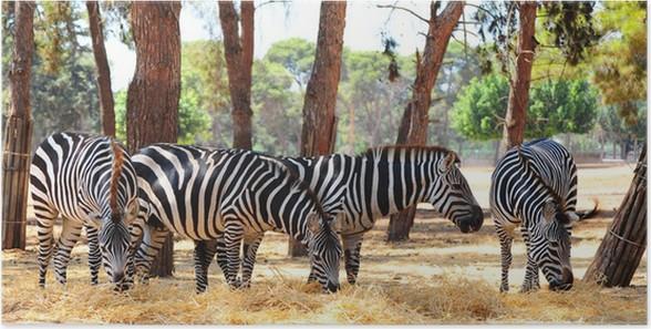 Plakát Zebra - Témata