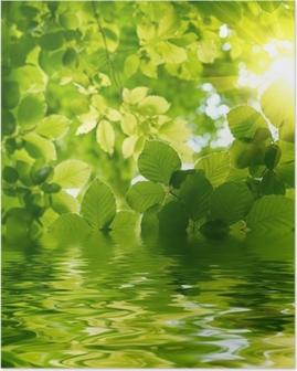 Plakát Zelené listy s Sun Ray