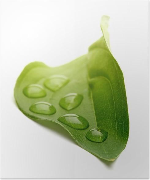 Plakát Zelený list s kapkami vody - Rostliny