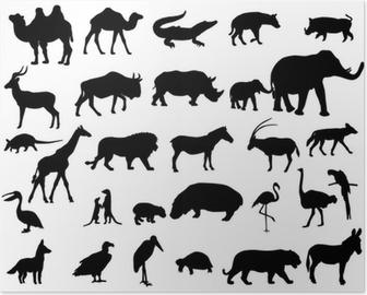 Plakat Zwierzęta z Afryki