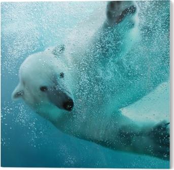 Plexiglas Print Ijsbeer onderwater aanval
