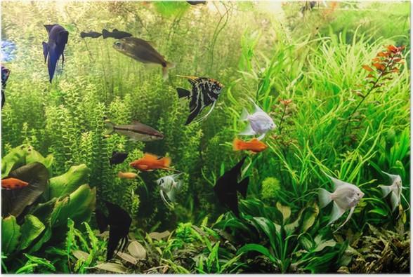 Pesci d acquario acqua dolce un verde bellissimo piantato for Arredo acquario acqua dolce
