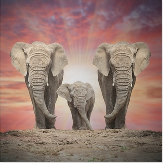 Poster Afrikanische Elefantenfamilie auf der Straße.