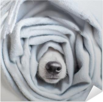 Poster Autoadesivo Cane avvolto in una sciarpa
