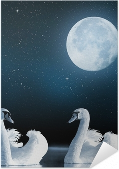 Poster Autoadesivo Cigni sul lago nel cielo notturno.