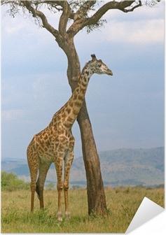 Poster Autoadesivo Giraffa e un albero, Masai Mara, Kenya