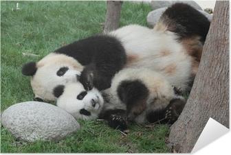 Poster Autoadesivo Panda gigante con il suo cucciolo dorme sull'erba
