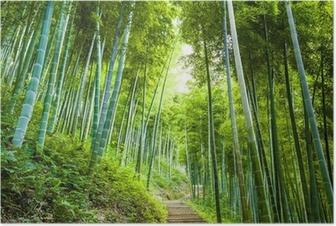 Poster Bambus-Wald-und Gehweg