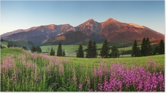 Poster Beauty Bergpanorama mit Blumen - Slowakei