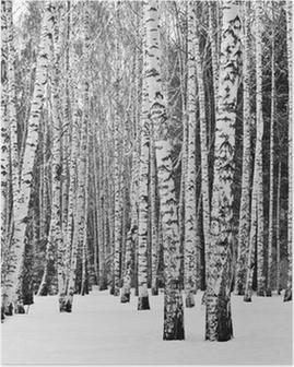 Poster Birkenwald im Winter in schwarz und weiß