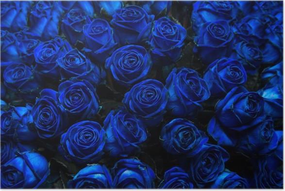 poster blaue rosen pixers wir leben um zu ver ndern. Black Bedroom Furniture Sets. Home Design Ideas