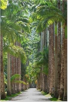Poster Botanischer Garten. Rio de Janeiro