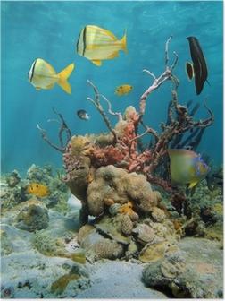 Poster Bunte Unterwasserwelt mit Korallen und Schwämme