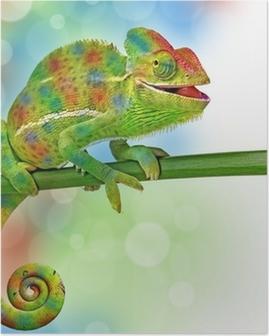 Poster Camaleonte e colori