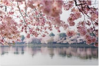 Poster Cherry Blossoms sul Bacino di marea a Washington DC