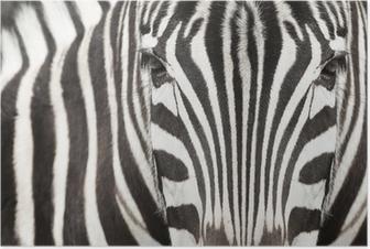 Poster Close-up von Zebra Kopf und Körper mit schönen Streifenmuster