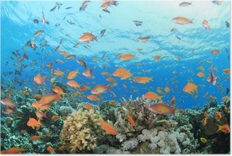 Poster Coral Reef Unterwasser