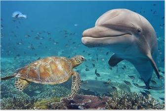 Poster Delphin und Schildkröte unter Wasser auf Riff