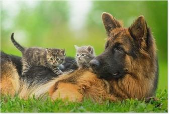 Poster Deutsch Schäferhund mit zwei kleine Kätzchen