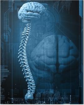 Poster Disegno astratto con il cervello e la colonna vertebrale