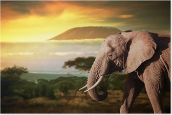 Poster Elefant auf Savanne. Mount Kilimanjaro bei Sonnenuntergang. Safari