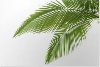 Poster Foglie di palma