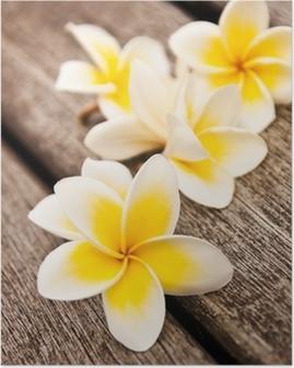 Poster Frangipani-Blüten, Holz Hintergrund